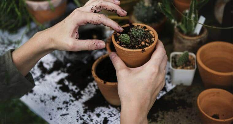 transplanting plants from ground to ground